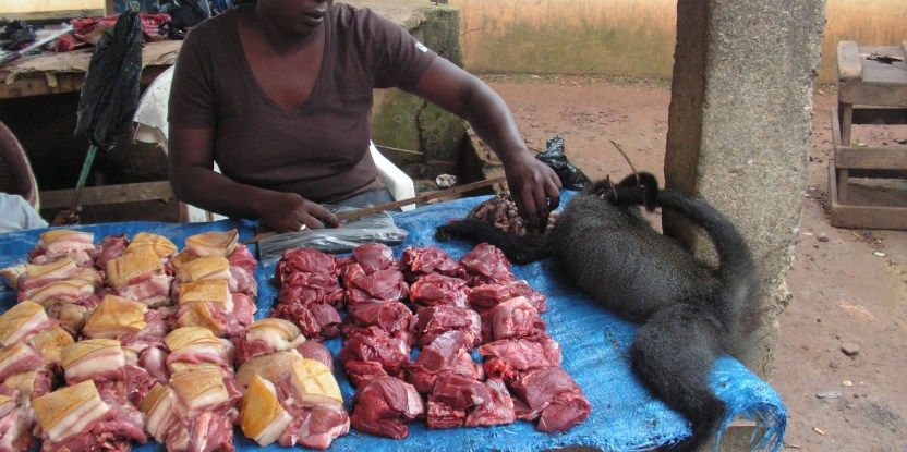 A new methodology for bushmeat research could be implemented around the globe, according to scientists.