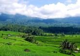 Campos de arroz  y bosques en Bali, Indonesia. Foto: Daniel Murdiyarso/CIFOR