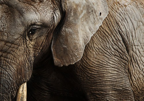 Patroli militer di zona konservasi gajah di Afrika seringkali menyebabkan kematian para penjarah dan petugas, selain juga tingginya biaya sosial dan finansial. Photo courtesy: Doug Kukurudza