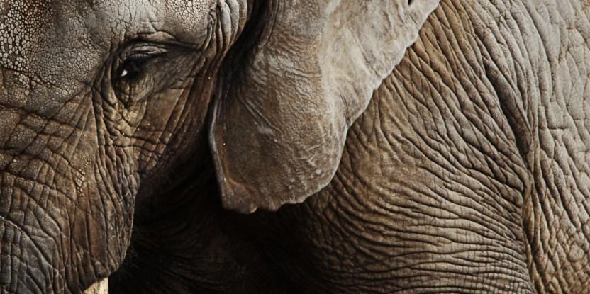 illegal wildlife trade solutions pdf