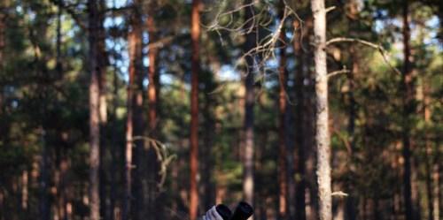 Pemantauan tutupan pohon dan kehilangan tutupan pohon dari 2001-2012 telah menghasilkan data baru yang berharga. Foto: Vahur Puik