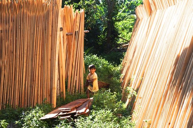 Formalización del comercio de los recursos del bosque: ¿oportunidades o riesgos?