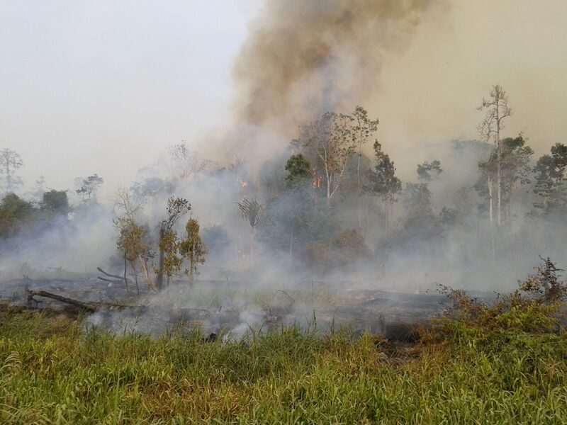 The Political Economy of Fire and Haze in Indonesia