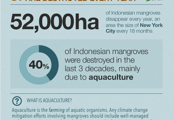 Mangrove-emissions-Infographic_sections5_3