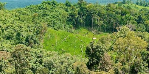 Coupe à blanc en Kalimantan de l'Est, probablement pour la production de l'huile de palme. Photo: CIFOR