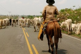 Cattle ranching is a major driver of deforestation in Brazil. Pablo Pacheco / CIFOR