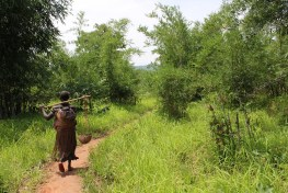 Understanding of how forests contribute to global food security is improving. Bronwen Powell/CIFOR