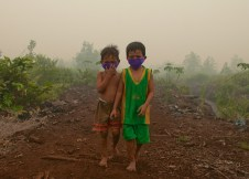 Preventing fire & haze: sustainable solutions for Indonesianpeatlands
