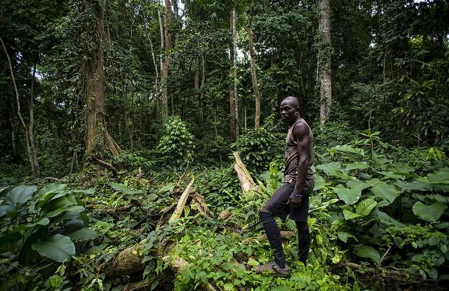 Améliorer la communication au sein des différents secteurs au Cameroun est la clé pour assurer une utilisation des terres plus durable. Ollivier Girard/CIFOR