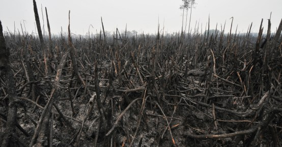 Rains have put out most fires, but the 'crisis must not be wasted'. Aulia Erlangga/CIFOR