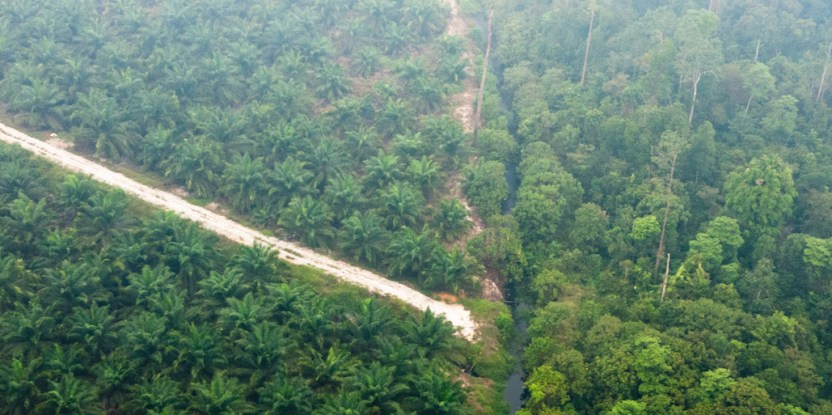 Preventing future fire and haze means unraveling what is really happening on the ground.