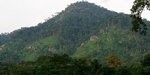 Perbukitan hutan tropis di Nigeria. Diskusi restorasi perlu bergeser menjadi kemandirian negara masing-masing.