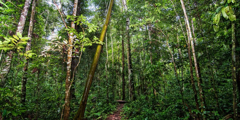 Spiritual beliefs affect how people behave in the forests in the Amazon.