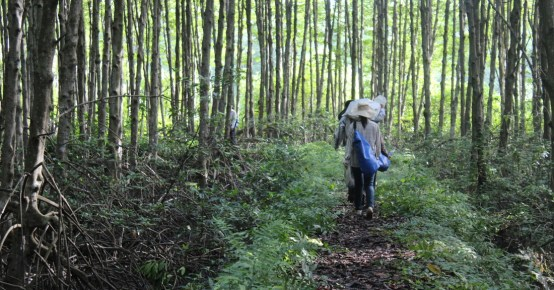 An international team of scientists have unearthed surprising results from the Can Gio Mangrove Biosphere Reserve. Vien Ngoc Nam / CIFOR.