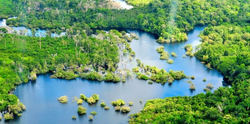 Aproximadamente un tercio de las mayores ciudades del mundo obtienen parte importante de su agua potable directamente de zonas forestales protegidas (Fuente FAO).