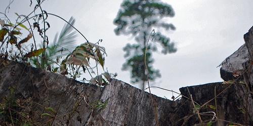 Data satelit dan lapangan membantu menghasilkan informasi biomassa hutan.