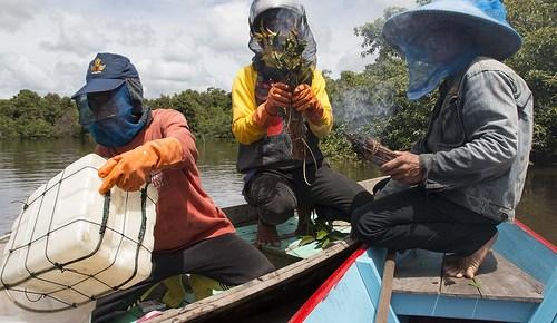 Memanen madu alami dari hutan. Tujuan pengelolaan hutan adalah untuk kesejahteraan, bukan sekedar membagi-bagi hak lahan.