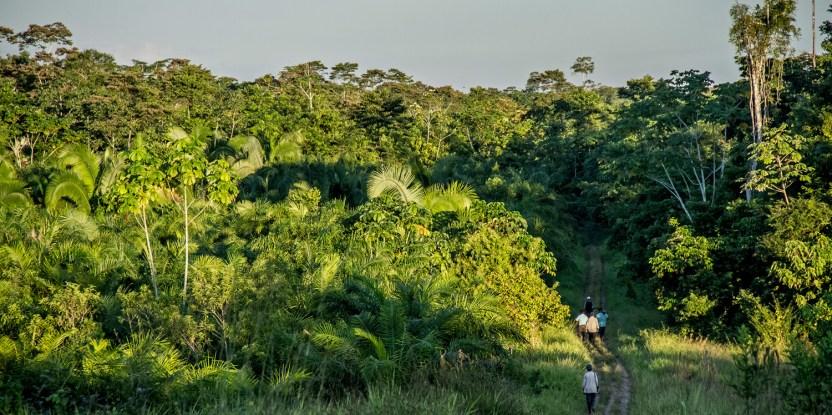 Bosque secundario, plantación de palma y carretera, un paisaje que ilustra las múltiples demandas sobre las tierras forestales.