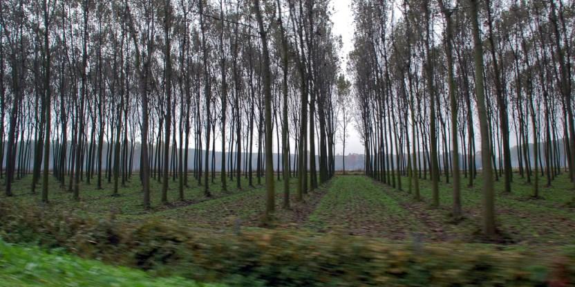 La rápida expansión de las áreas de plantaciones forestales, también viene acompañada de  un interés creciente en la responsabilidad social y ambiental, aunque queda mucho por hacer.