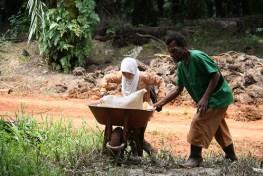 Petani kecil memupuk kelapa sawit di Papua.