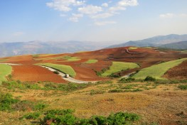 Program Konversi Lahan Pertanian menjadi Hutan di China memungkinkan membayar petani untuk menanam pohon di lahan mereka, dan mengalokasikan lahan terdegradasi pada keluarga untuk direstorasi.