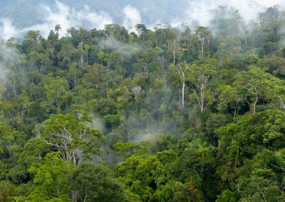 Natural production forest is dotted with mist in West Kutai district in East Kalimantan, Indonesia.