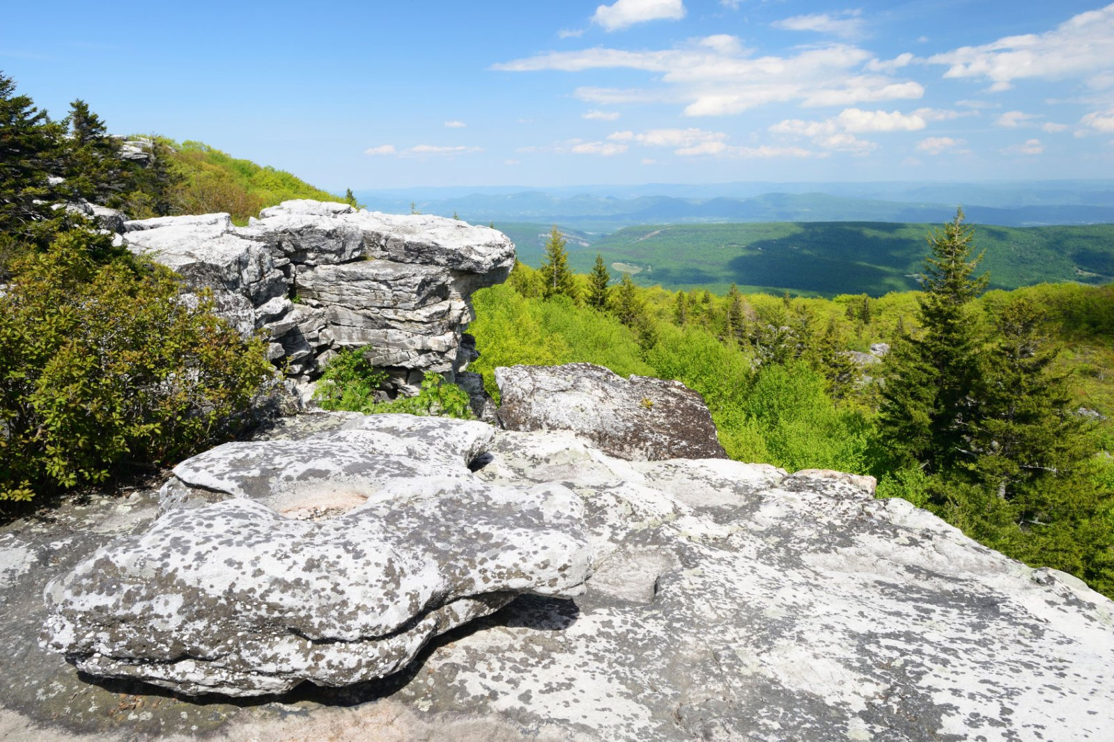 Dolly Sods Wilderness in Spring