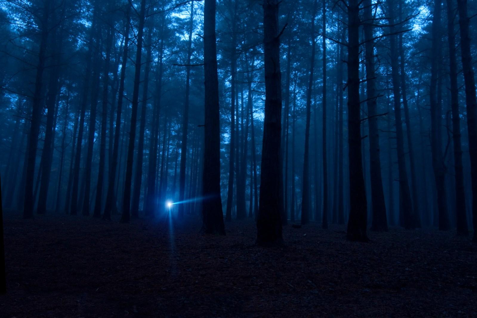 dark woods at night