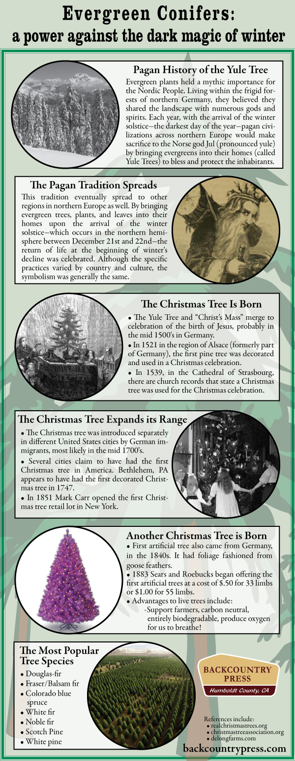 This infographic explores the long and storied history of bringing evergreen conifers into our homes near the end of each calendar year.