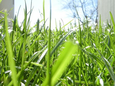 Grass. You just want to run through it. Or lie in it. Image: Flickr / hummyhummy