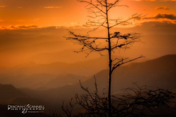 Autumn Stillness