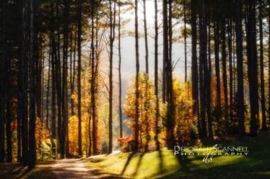 Enlightened Pines