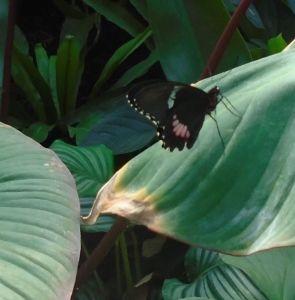 Amsterdam Zoo Butterflies