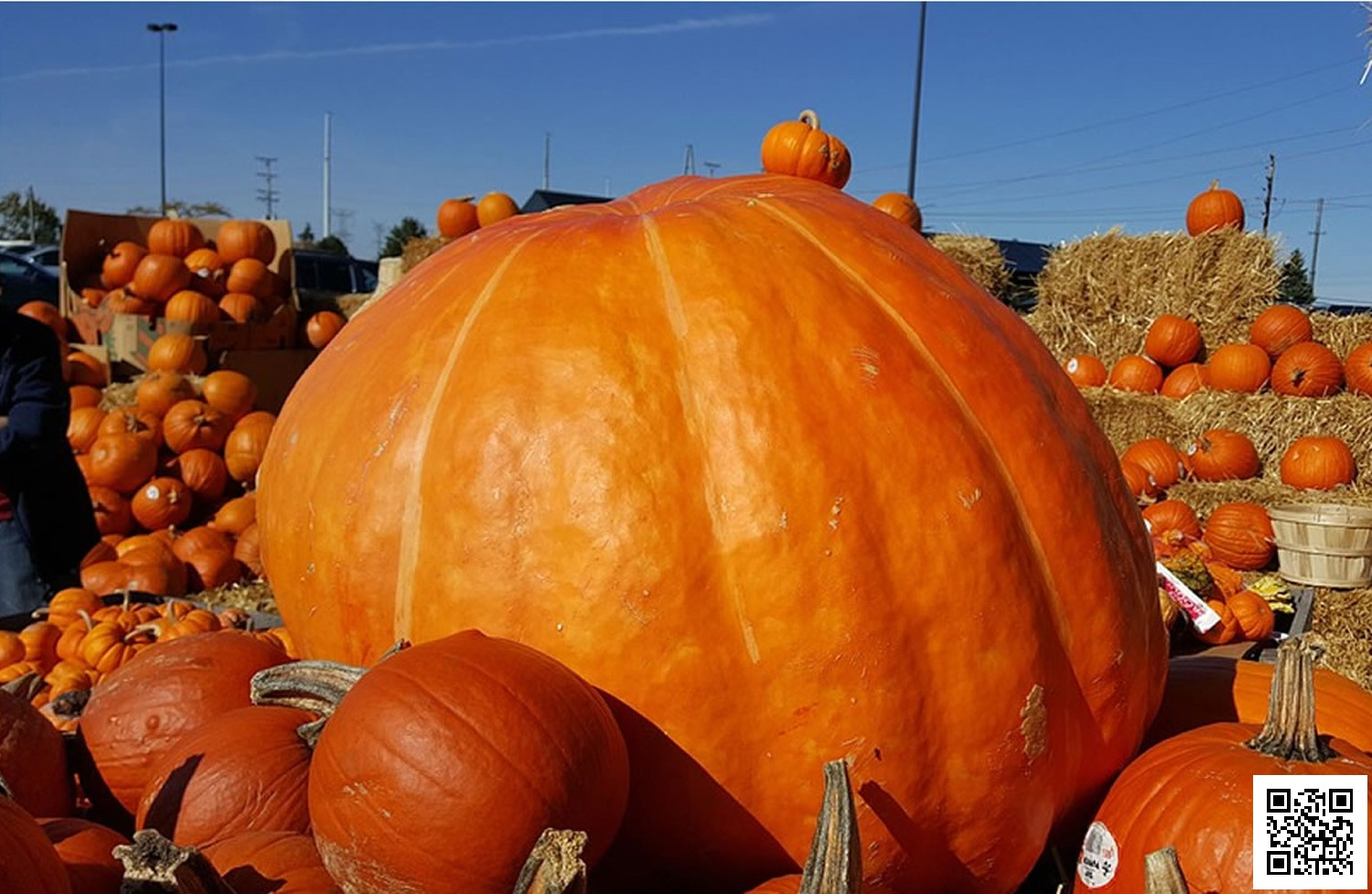 Pumpkin Record With 2,261 Pounder