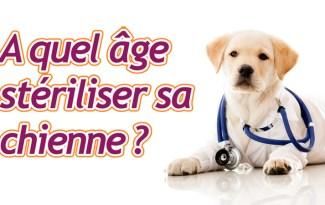 steriliser chienne