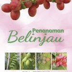 REVIEW PENANAMAN BELINJAU