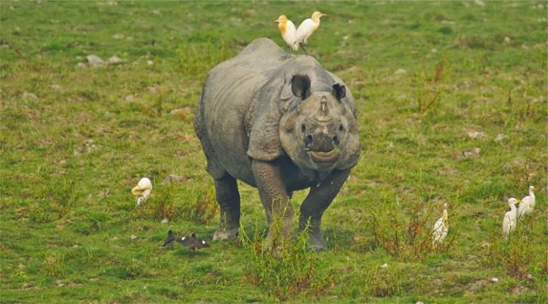 kaziranga wildlife