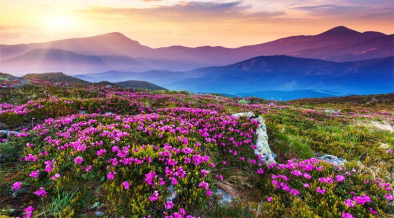 valley of flower