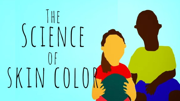 The science of skin color (in TED-Ed GIFs) |