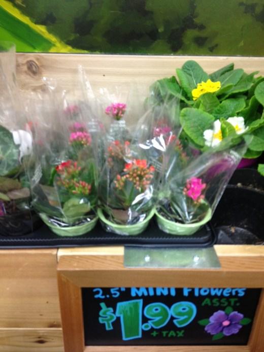 miniflowerstraderjoes