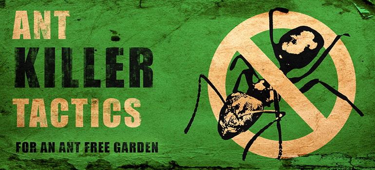 Ant Killer Tactics \u2013 How to Get Rid of Ants in the Garden