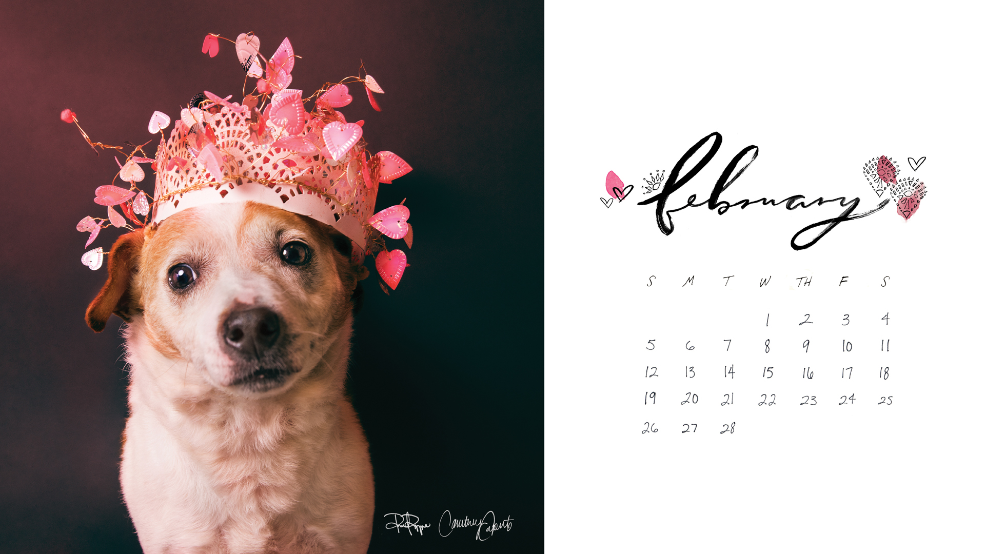 Cute Downloadable Wallpapers February Fp X Paws 2017 Calendar Download