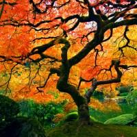 Árvore no Jardim Japonês