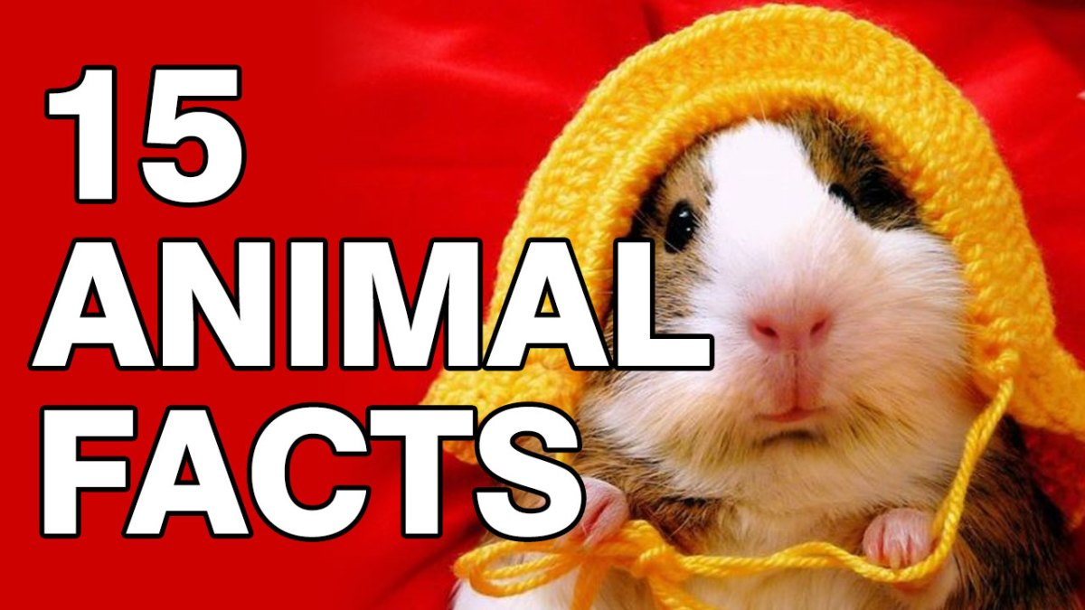 Video: 15 Animal Facts