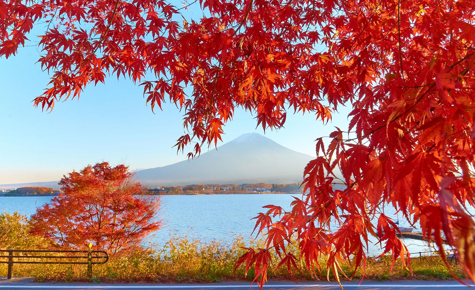 Falling Cherry Blossom Wallpaper Hd Japanese Autumn And Its Foodie Treats Gaijinpot