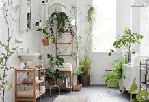 plantas-purificadoras-aire