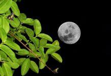 poder-luna-plantas