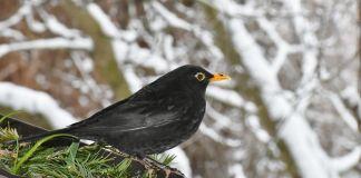 proteger-ave-temperaturas-bajas