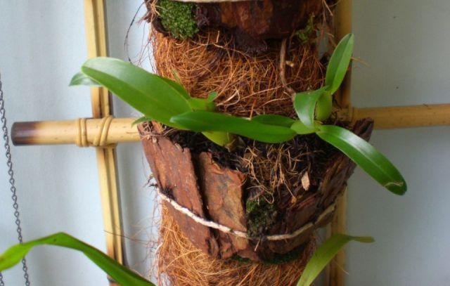 Fibra de coco ventajas
