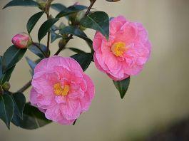 Consejos rosales